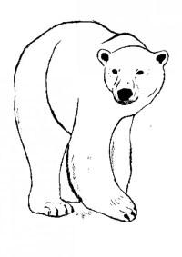 Fotos de oso polar para pintar | Colorear imgenes