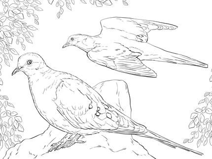 Dibujos de aves para imprimir y colorear  Colorear imgenes