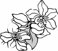 Flores Para Colorear Faciles Flores Para Colorear Fciles