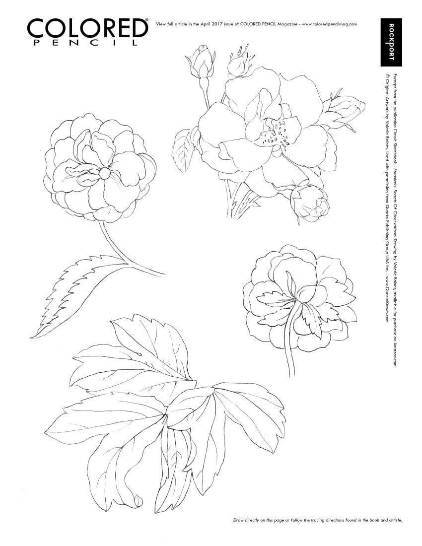 Botanicals Classic Sketchbook Secrets of Observational