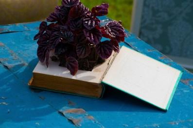 Colores-de-boda-rincon-sillones-sofas-antiguos-baul--laura-y-raul_0036
