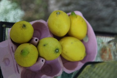 colores-de-boda-8.2-puesto-limonada-limones