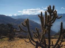 Im Hintergrund die Cordillera Huayhuash, vor der Nase Kakteen