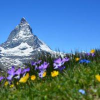 Sudel-Alice lebt wieder in der Schweiz