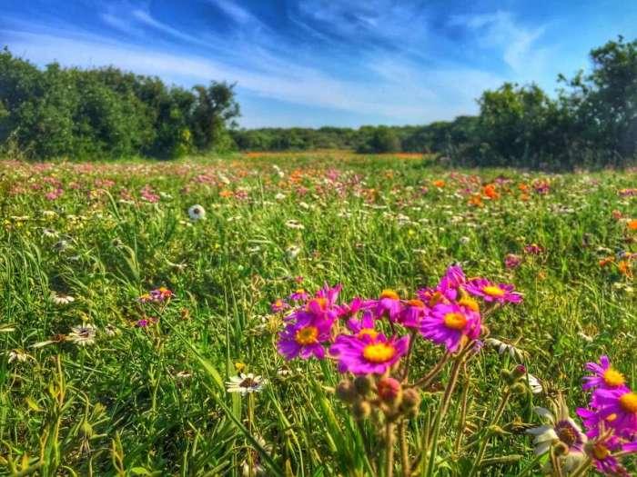 Blumen im West Coast Nationalpar