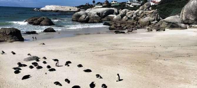Simon's Town auf der Kap-Halbinsel