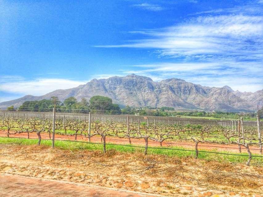 Weingut vor der Kulissen der südafrikanischen Berge