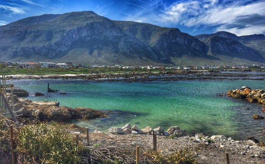 Die Pinguine an Betty's Bay
