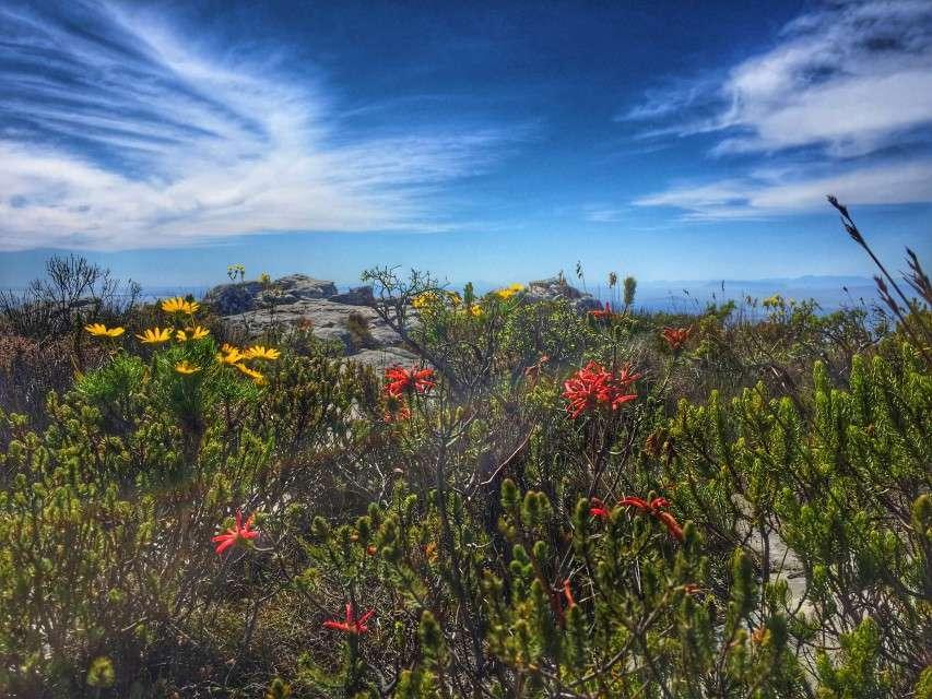 Natur auf dem Tafelberg