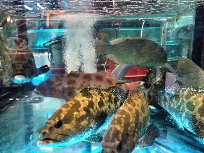 Lebende Fische in der Auslage