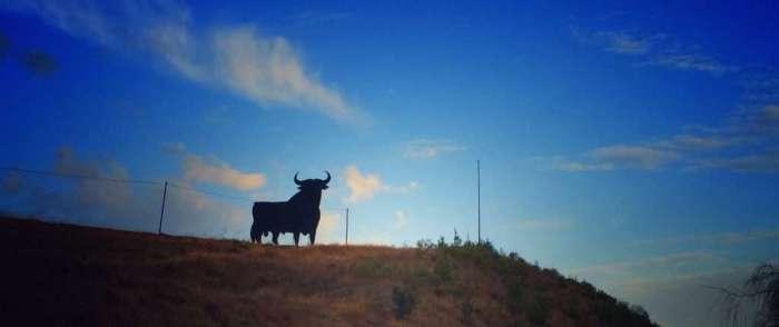 Osborne-Stier an einer Landstraße