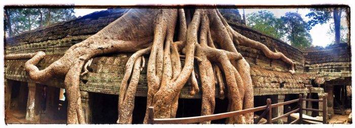 Baum wächst aus dem Tempel