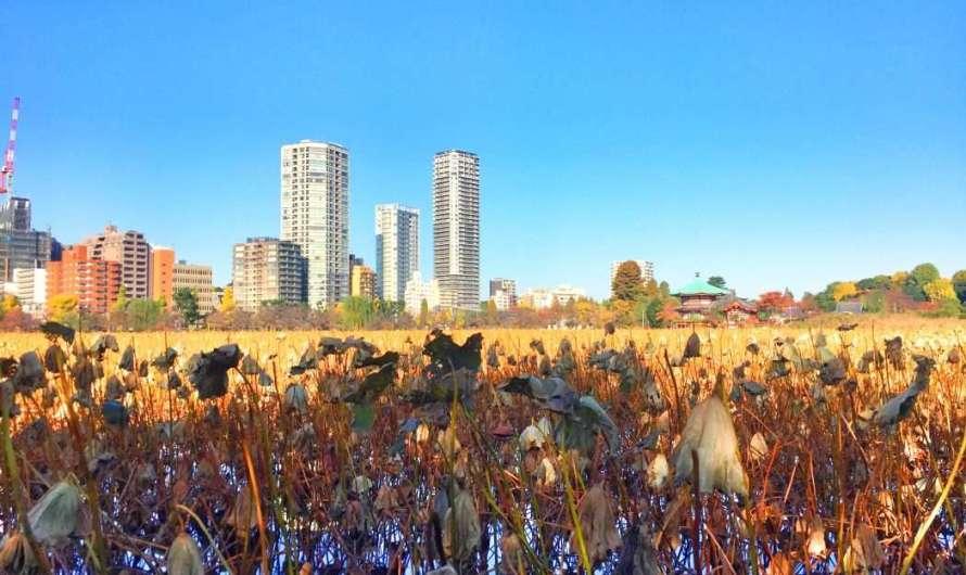 Ueno-Park und die Kirschblüten