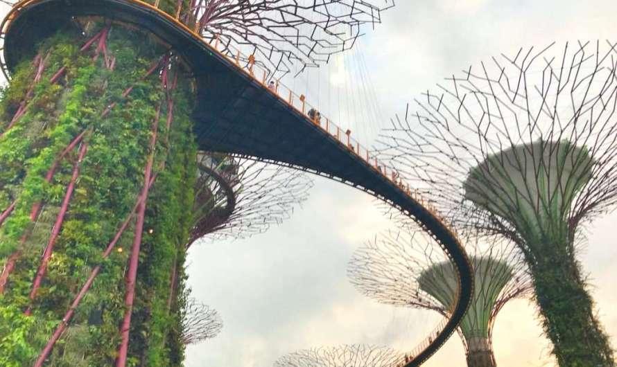 Die Super-Bäume in Gardens by the Bay in Singapur
