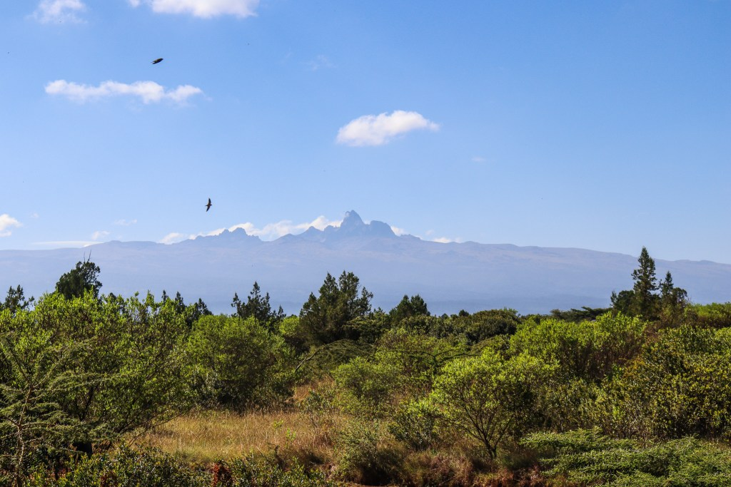 Mount Kenya view with birds
