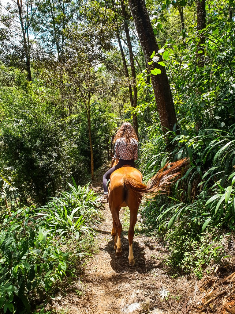Tigoni Tea Farm Nairobi Kenya Horse
