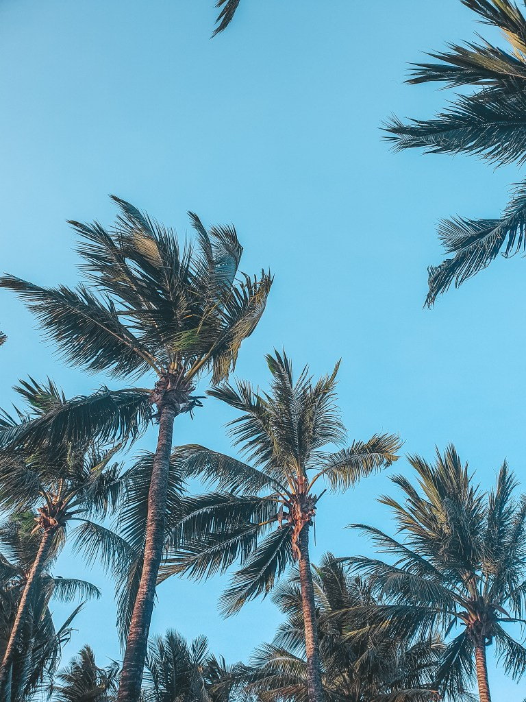 Zanzibar Travel palm trees