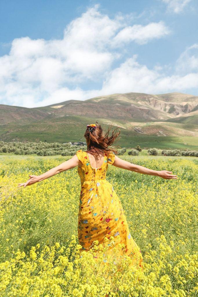 Wildflowers Israel Flower Fields Mustard