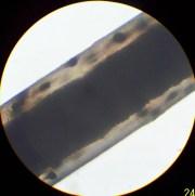 dog hair under microscope color