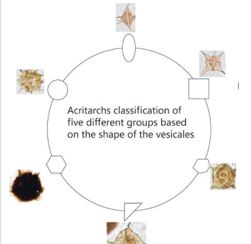 Acritarchs