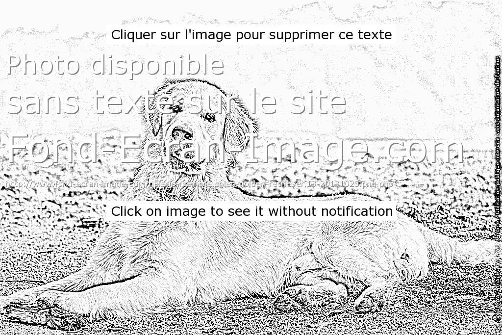 Coloriage A Imprimer De Chien Labrador Coloriage Imprimer