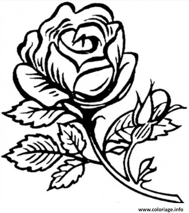 Coloriage Roses 34 dessin