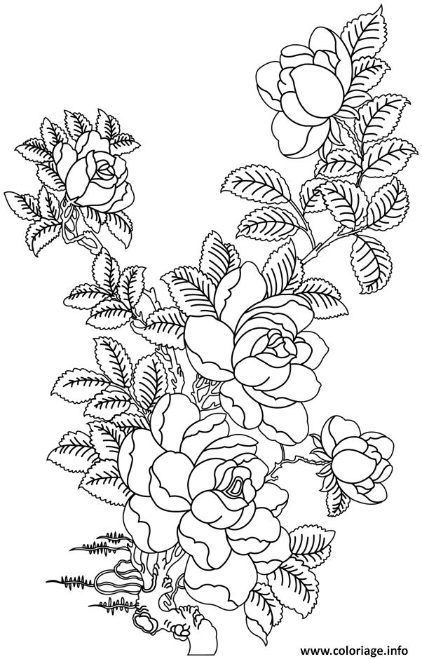 Coloriage Roses 60 Dessin