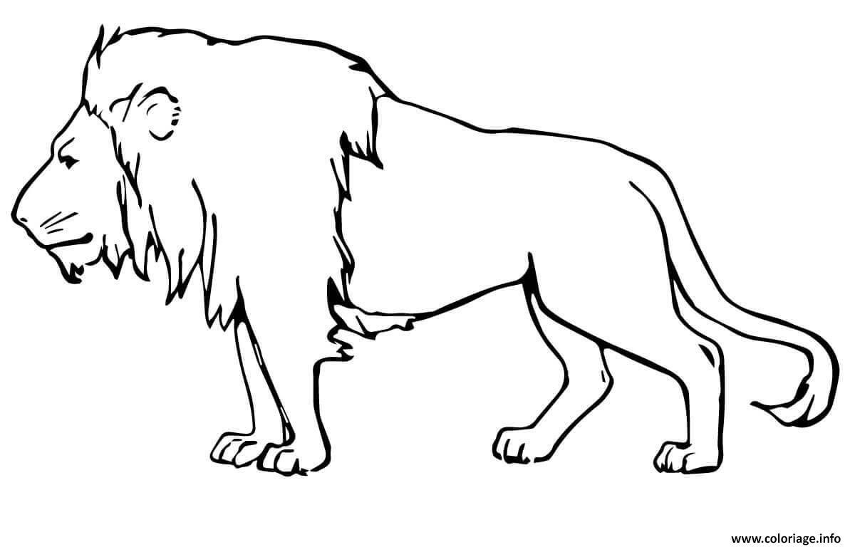 Coloriage Lion Masculin Male Dessin