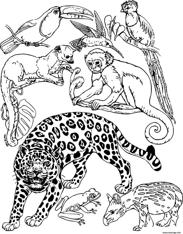 Coloriage Animaux De La Jungle Dessin Animaux De La Jungle à imprimer