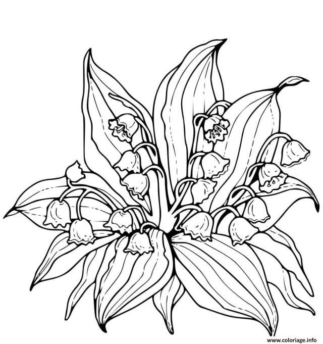 Coloriage Fleurs De Muguet Realiste Dessin Muguet 12er Mai à imprimer