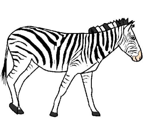 Desenhos De Zebra Moldes De Zebra