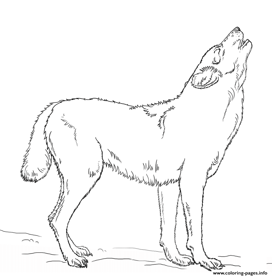 Howling Wolf Coloring Pages Printable