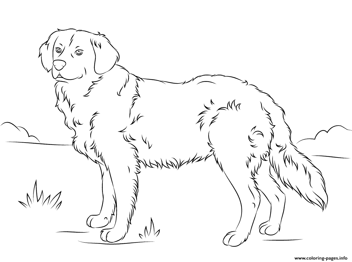 Golden Retriever Cute Dog Coloring Pages Printable