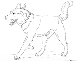 Husky Dog Realistic Coloring Pages Printable
