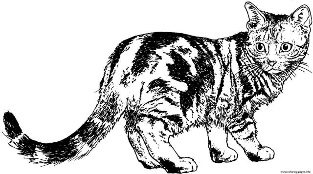 Realistic Cat Animal Coloring Pages Printable