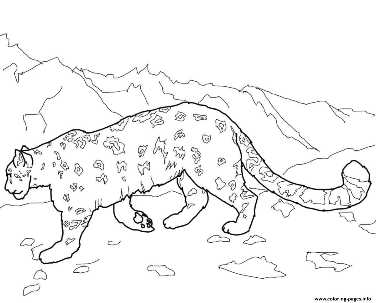 Snow Leopards Animal Coloring Pages Printable