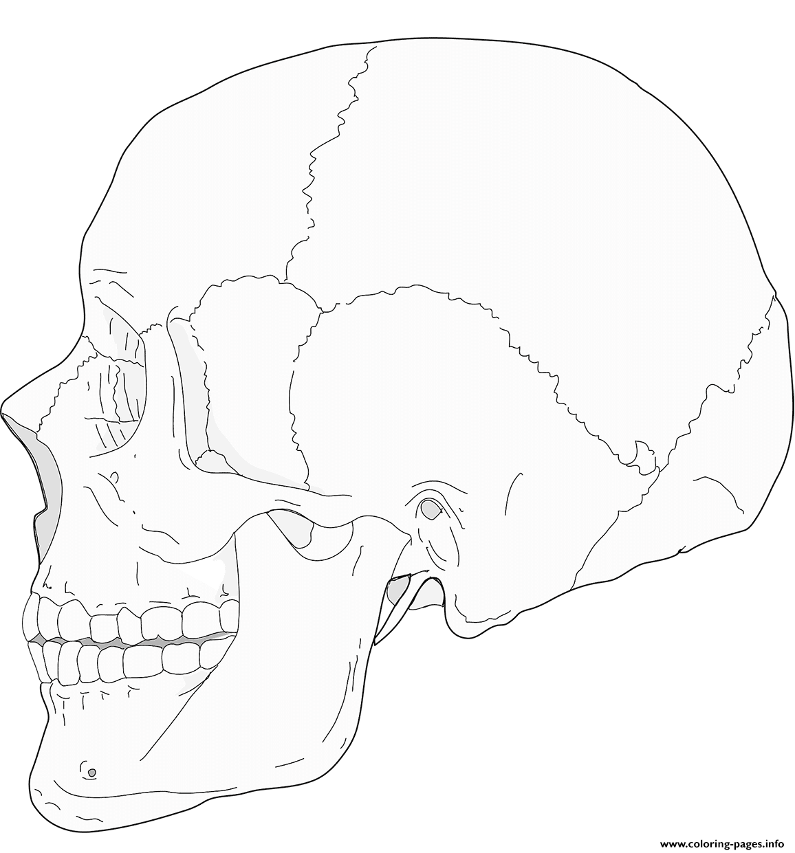 Human Skull Side View Coloring Pages Printable