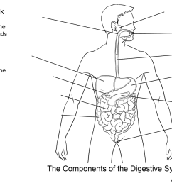 Digestive System Color Worksheet   Printable Worksheets and Activities for  Teachers [ 944 x 1265 Pixel ]