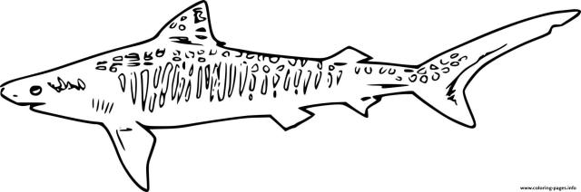 Swimming Sand Tiger Shark Coloring Pages Printable