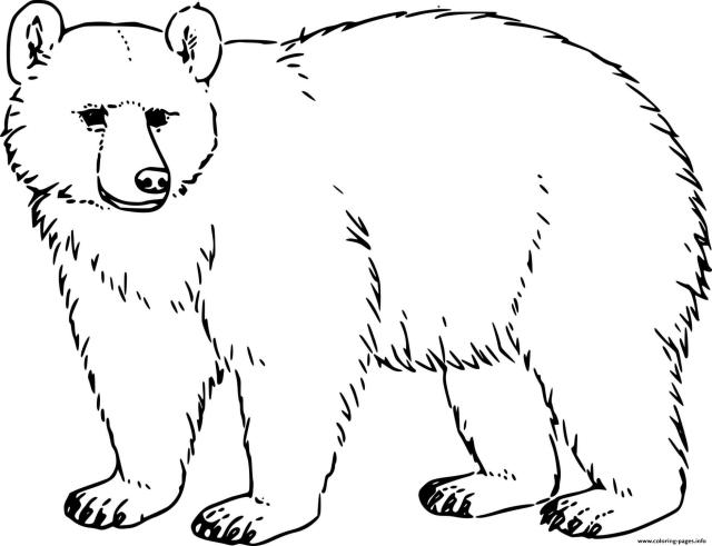 Realistic Black Bear Coloring Pages Printable