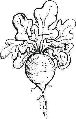 garden - radish coloring pages