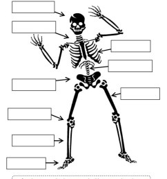 4th Grade Coloring Pages Educational Skeleton Science Worksheet Print 2020  0377 Coloring4free - Coloring4Free.com [ 1079 x 763 Pixel ]