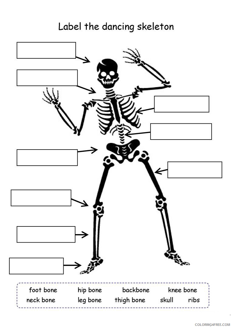 hight resolution of 4th Grade Coloring Pages Educational Skeleton Science Worksheet Print 2020  0377 Coloring4free - Coloring4Free.com