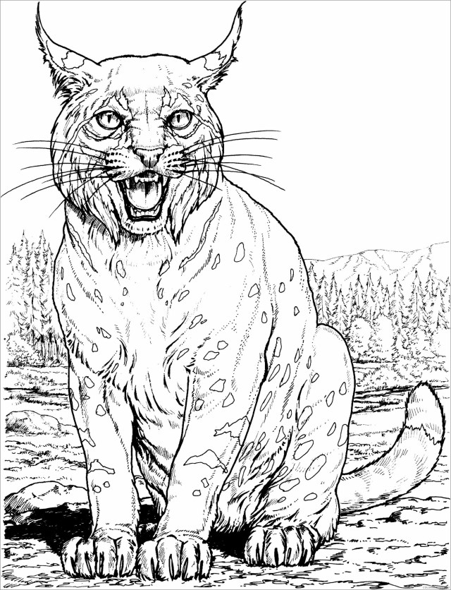 Cat Coloring Pages Animal Printable Sheets realistic lynx big cat