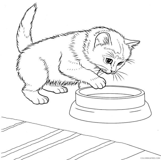 Kitten Coloring Pages Animal Printable Sheets javanese kitten 29