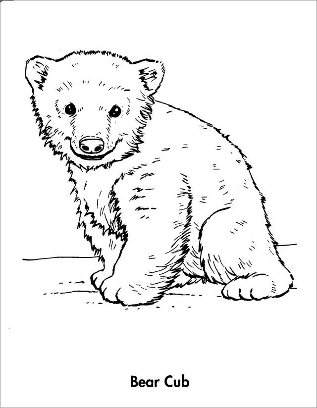 Baby Bear Coloring Page - ColoringBay