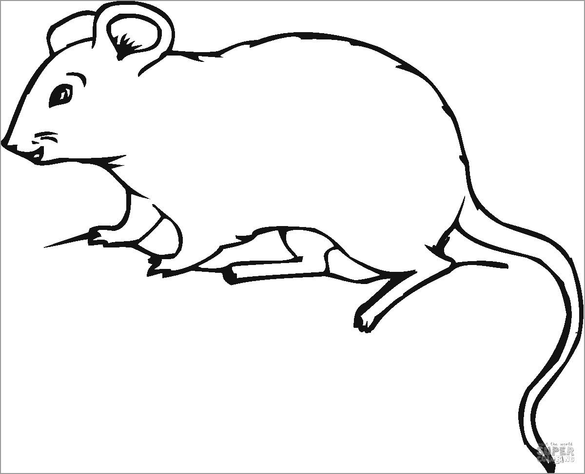 Mole Rat Coloring Pages