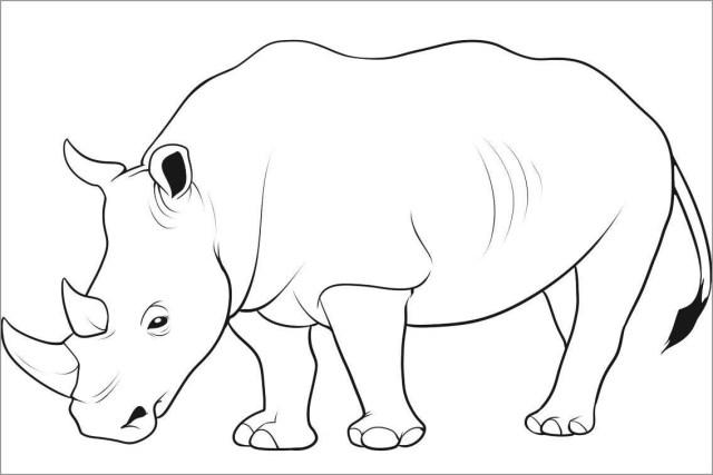 Printable Rhino Coloring Page - ColoringBay