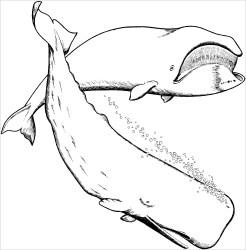 Beluga Coloring Pages ColoringBay
