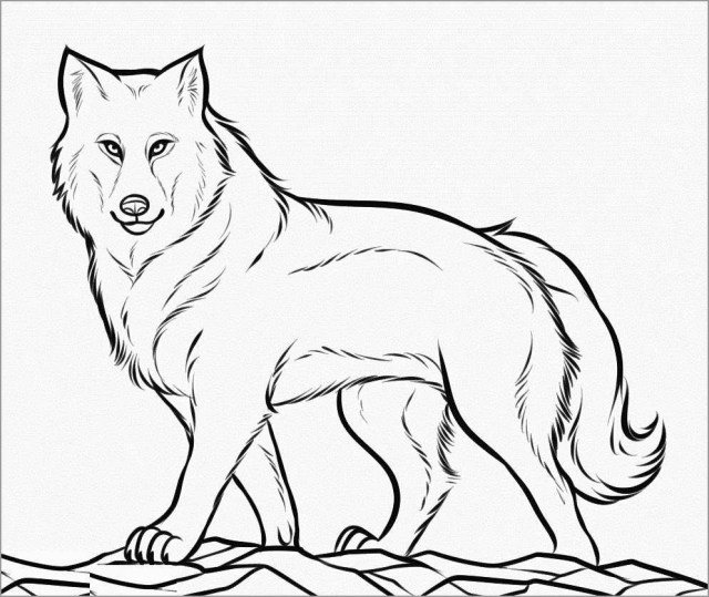 Realistic Wolf Coloring Page for Adult - ColoringBay
